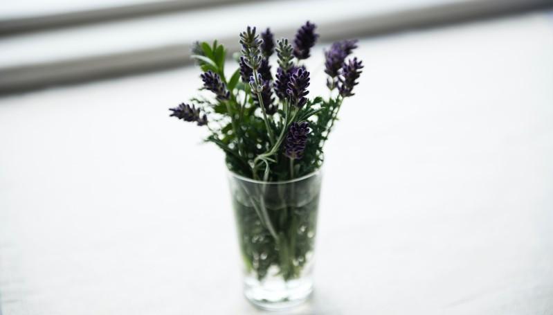 Lavendel ist die Powerpflanze mit großer Wirkung